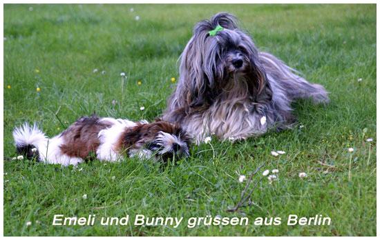 Rickys-Havaneser-Bunny-mit-Emeli 3