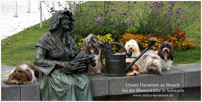 Blumen-K�the-in-Schwerin