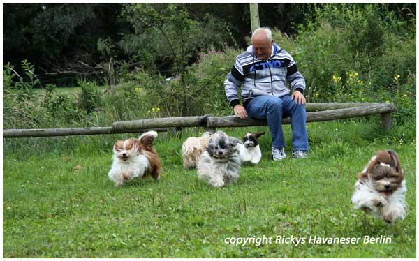 Rickys-Havaneser-aus-berlin-mit-Herrchen-im-Sommerurlaub-an-der-Ostsee