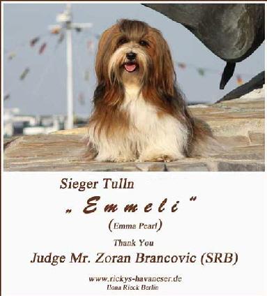 Winner-Tulln-2012-Club-Show---rickys-havaneser-Berlin